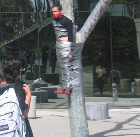 прикол привязанный к дереву